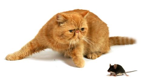 Katz und Maus – Wen oder was?
