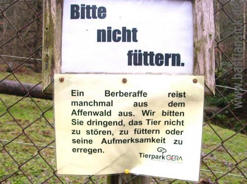 Berberaffe reist aus Tierpark Gera © Christina Liebert 4.12.2015 WZ_OTCXKXfk_f